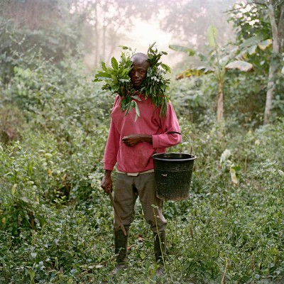 Paul Ankomah, Wild Honey Collector, Techiman District, Ghana